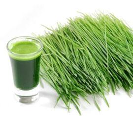 controindicazioni della alga clorella